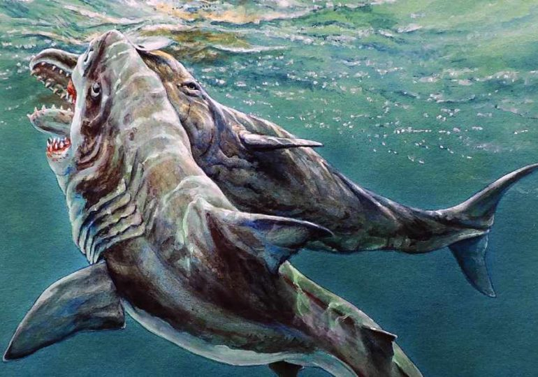 Fund aus dem Neogen: Beschädigter Zahn weist auf Kampf zwischen Megazahnhai und Pottwal hin
