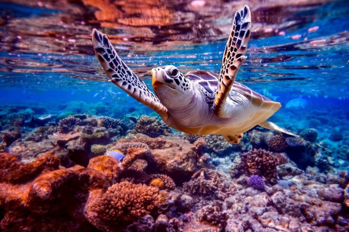 Schildkröte über bunten Korallenriffen