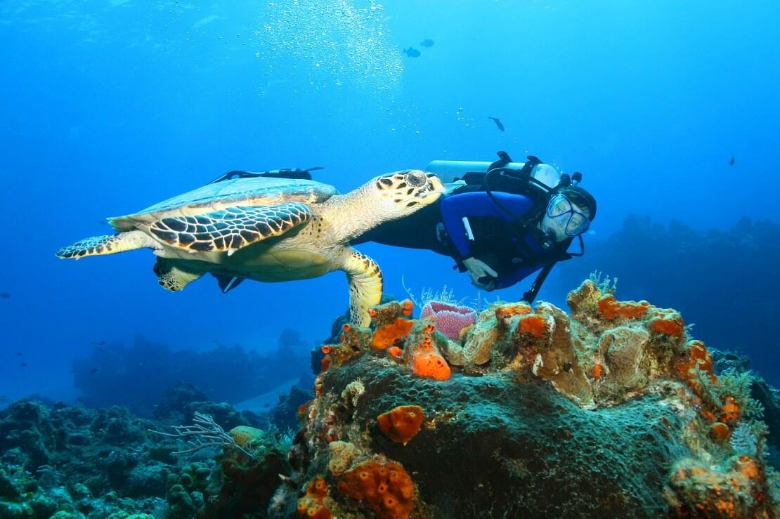 Schildkröte mit Taucherin in den Gewässern von Cozumel