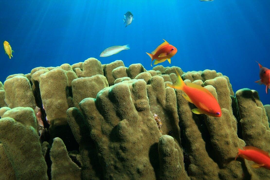 Eine Steinkoralle mit bunten Rifffischen