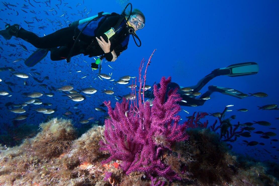 Zwei Taucher über einem Korallenriff