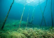 Von einem Unterwasserwald und einem möglichen Schatz – 3 der beliebtesten Tauchspots in Deutschland