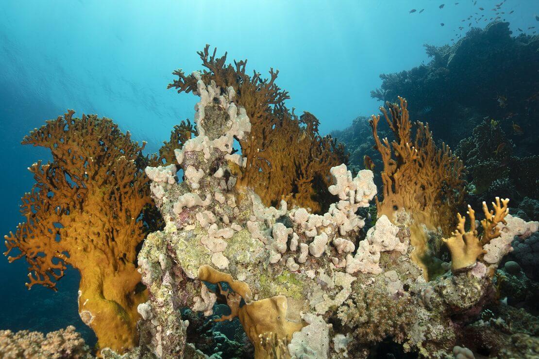 Ein Korallenriff in den Gewässern von Makadi Bay