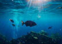 Geschichten von schlafenden Unterwasserriesen: 3 der spektakulärsten Schiffswracks